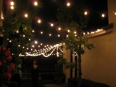Patio String Globe Lights 50 Feet With 33 G50 Clear Description And Information Bulbs On Green Wire 18 Ing Usage